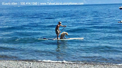 Dog Paddle Boarding in Lake Tahoe