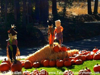 Fall Festival Pumpkin Patch Tahoe City